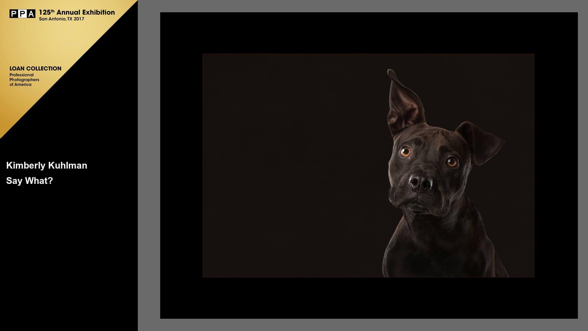 Say What IPC 2016 Pitbull Rescue Loan Grand Imaging Awards Animal Portrait