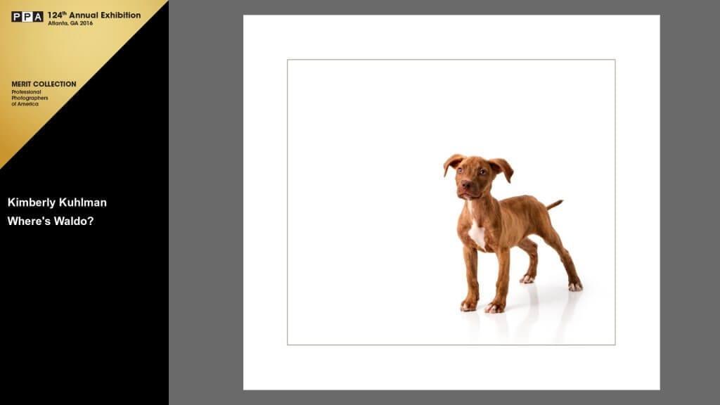 Where's Waldo 2015 International Photographic Competition Merit Pitbull Puppy Rescue