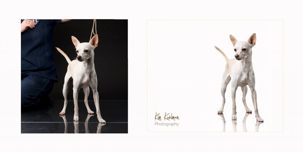 PPGH February 2016 Second Place Chihuahua dog rescue shelter Standing Tall