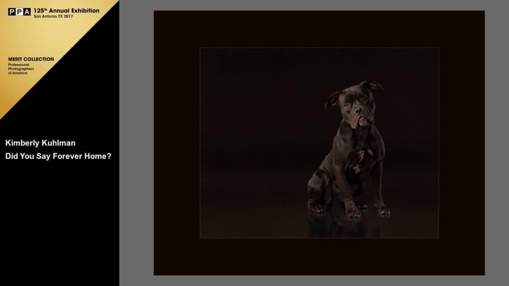 Forever Home Pitbull Rescue 2016 IPC Silver Medalist Merit
