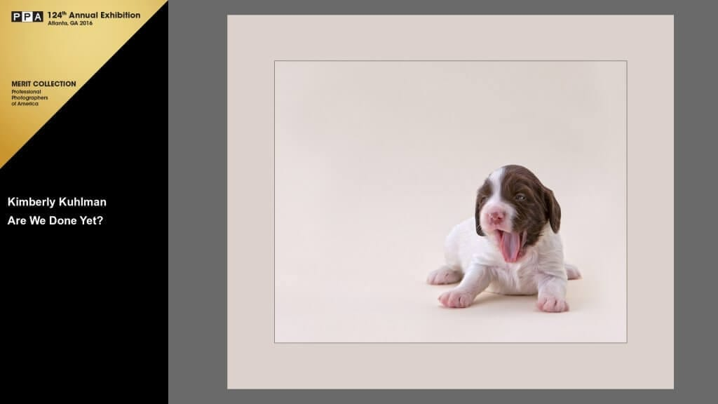 Are We Done Yet? English Springer Spaniel Puppy 2015 International Photographic Competition Merit